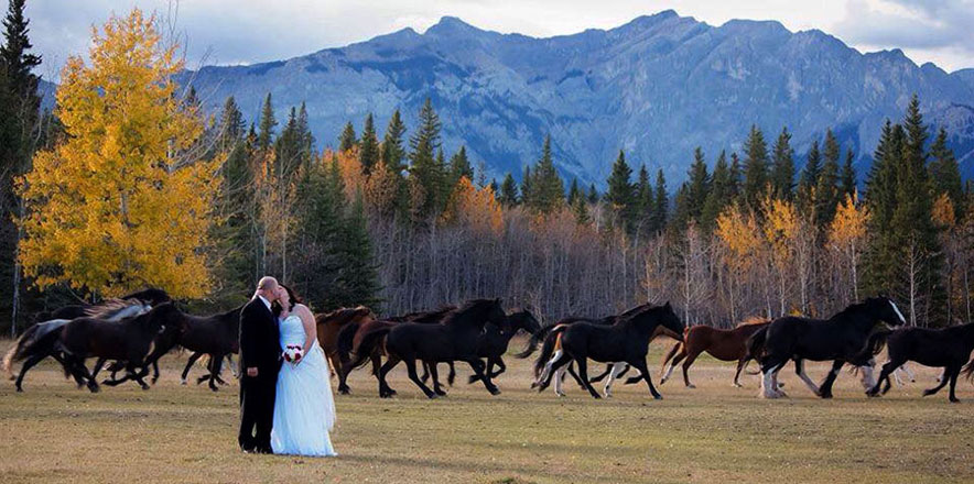 Make it a Destination Wedding in Calgary and Banff