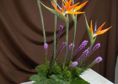 office flowers Bird of Paradise FFAR02272