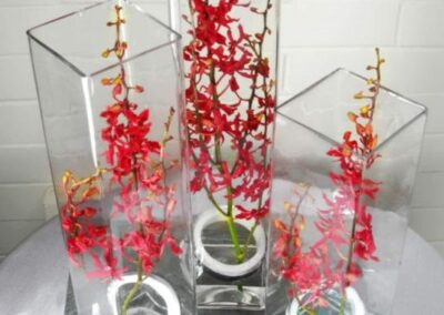 office flowers Red Orchid FFAR02072